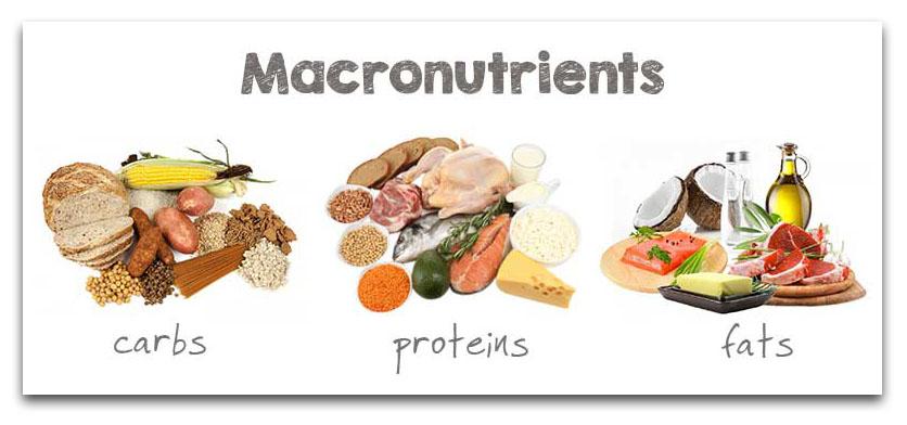 The 3 Macronutrients