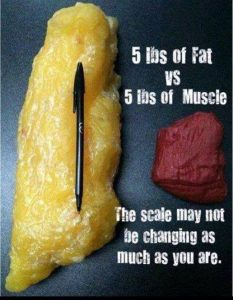 Muscle vs Fat - The scale may not be changing as much as you are.